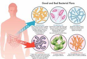 Globallee IAccel Bacterial Flora